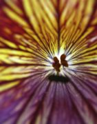 botanical art,photography,Flower Burst