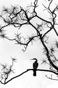animals art,nature art,photography,Ibis Silhouette