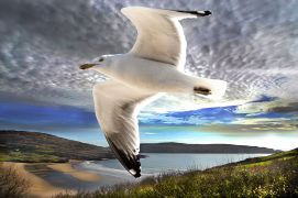 Animals art,Seascape art,photography,Gull