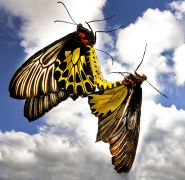 animals art,photography,Butterflies
