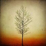 Nature art,Flora art,photography,Amber Fog