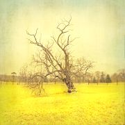 Landscape art,Nature art,Flora art,photography,This Tree Stands
