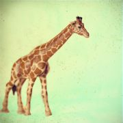 Children's art,Animals art,photography,Giraffe