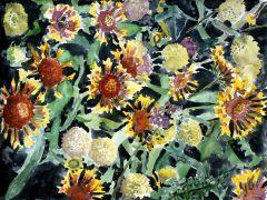 botanical art,watercolor painting,Indian Blanket Flower