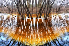 nature art,surrealism art,photography,Reflect