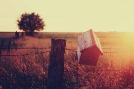 Landscape art,photography,A Home For A Bird