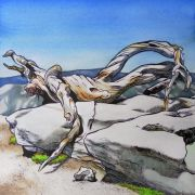 landscape art,nature art,botanical art,watercolor painting,The Fallen Branch