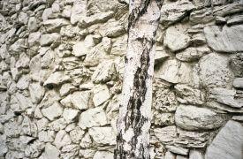 Abstract art,photography,walnut creek