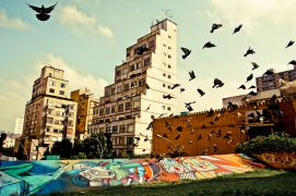 Architecture art,Animals art,City art,photography,SAMPA BIRDS
