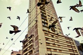 Animals art,City art,photography,SAMPA BIRDS III