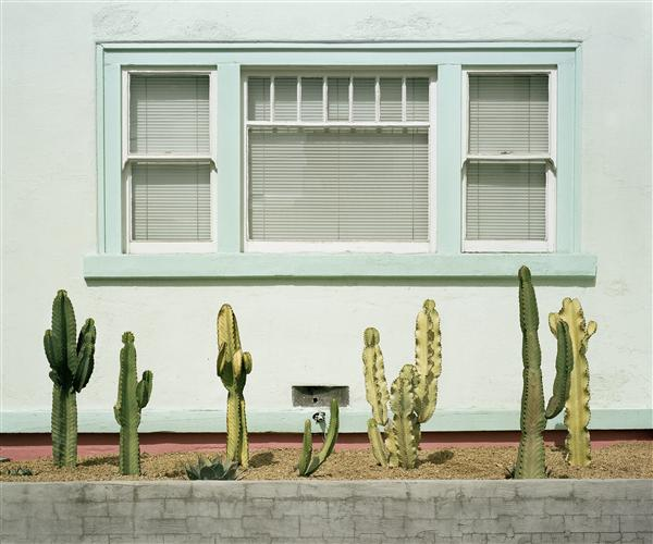 Original art for sale at UGallery.com | Cacti Study by Mark Yaggie | $225 | photography | 24' h x 20' w | http://www.ugallery.com/photography-cacti-study