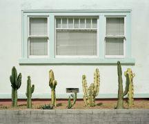 Architecture art,Western art,photography,Cacti Study