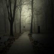 Landscape art,Surrealism art,photography,A Forest