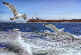Animals art,Seascape art,photography,Montauk Gulls