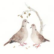 animals art,watercolor painting,Gollared Dove