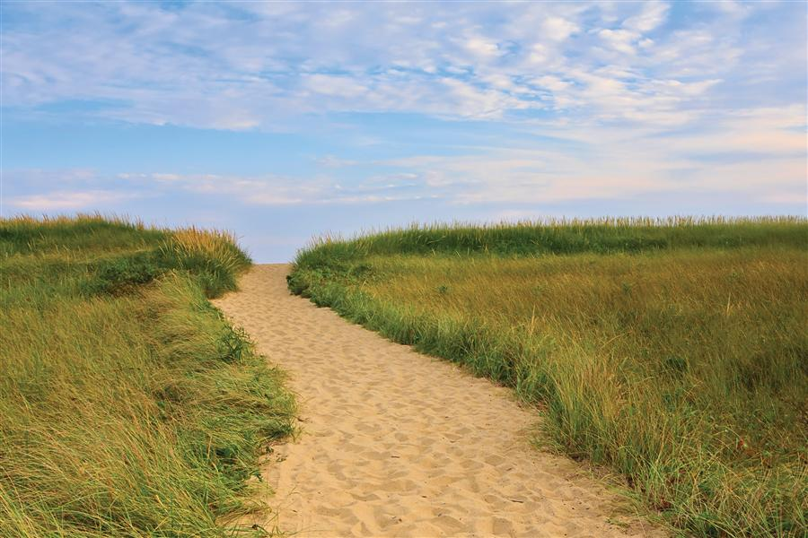 Original art for sale at UGallery.com | Martha's Vineyard Beach Path by Katherine Gendreau | $325 | photography | 36' h x 24' w | ..\art\photography-Martha-s-Vineyard-Beach-Path