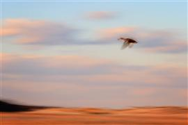 Animals art,Landscape art,photography,Flight