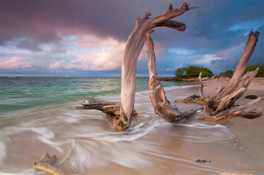 Original art for sale at UGallery.com | Driftwood Sunset by Katherine Gendreau | $325 | photography | 36' h x 24' w | ..\art\photography-Driftwood-Sunset