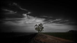 landscape art,nature art,photography,The Princess Tree II