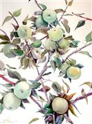 nature art,botanical art,watercolor painting,Green Apples