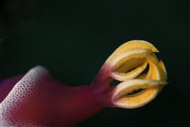 animals art,seascape art,photography,Nudibranch Gills