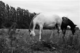 animals art,nature art,photography,Horses