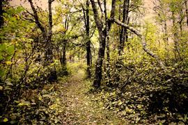 Landscape art,Nature art,photography,Resolute