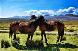 Animals art,Nature art,photography,A Hug between Friends