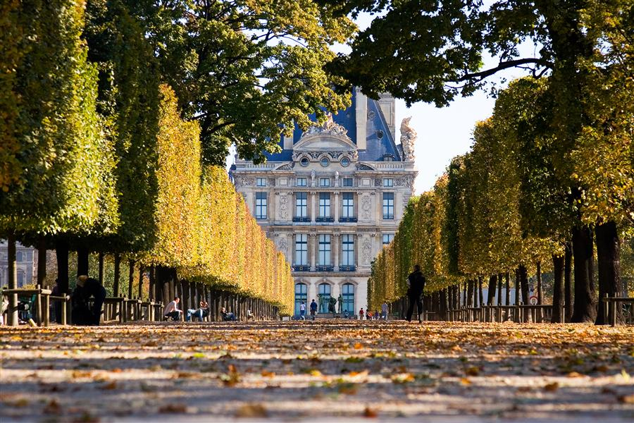 Original art for sale at UGallery.com | Tuileries Gardens and Louvre in Fall, Paris by Mathew Lodge | $425 | photography | 36' h x 24' w | ..\art\photography-Tuileries-Gardens-and-Louvre-in-Fall-Paris
