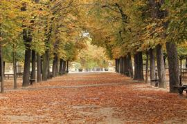 landscape art,city art,photography,Autumn Leaves