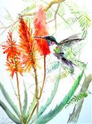 animals art,botanical art,watercolor painting,Hummingbird and Aloe