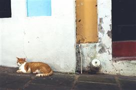 animals art,city art,photography,Street Gato