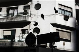 Architecture art,City art,photography,Pigeons
