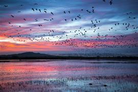 Animals art,Landscape art,Nature art,photography,Pink Murmuration