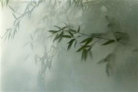 Nature art,Flora art,photography,Bamboo
