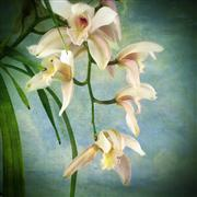 Nature art,Flora art,photography,Orchids