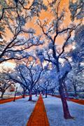 landscape art,nature art,surrealism art,photography,North Boulevard