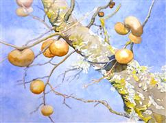 Nature art,Flora art,watercolor painting,Oak Apples and Lichen