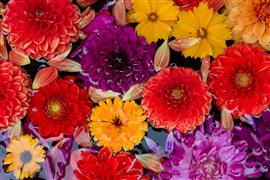 Still Life art,Flora art,photography,Flowers