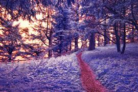Fantasy art,Landscape art,Flora art,photography,Red Path