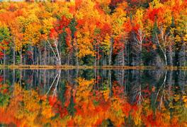 Landscape art,Nature art,Flora art,photography,Redjack Lake Fall