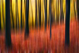 Abstract art,Landscape art,photography,Forest Abstraction