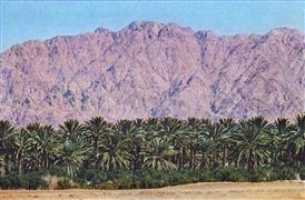Landscape art,Travel art,photography,Date Palms on the Red Sea