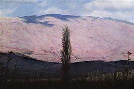 Impressionism art,Landscape art,Representational art,photography,Cypress, the Galilee