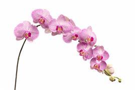 Flora art,Representational art,photography,Orchids