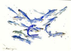 Animals art,Representational art,watercolor painting,Zebrafish, Danio (Dynamic Composition)
