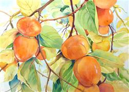 Nature art,Cuisine art,Representational art,watercolor painting,Golden Persimmons