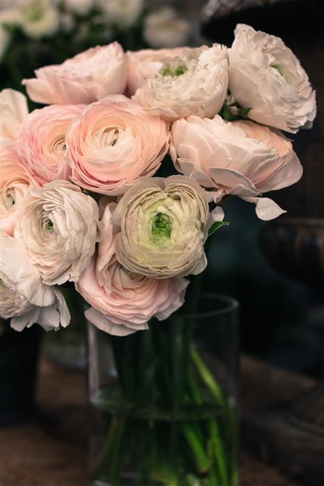 Original art for sale at UGallery.com | Pink Paris Ranunculus  by Rebecca Plotnick | $25 | photography | 36' h x 24' w | ..\art\photography-Pink-Paris-Ranunculus