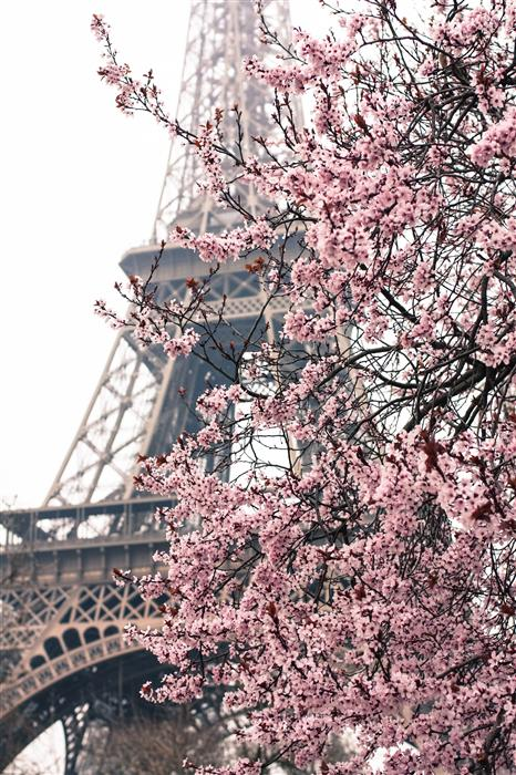 Original art for sale at UGallery.com | Paris in the Springtime  by Rebecca Plotnick | $25 | photography | 36' h x 24' w | ..\art\photography-Paris-in-the-Springtime
