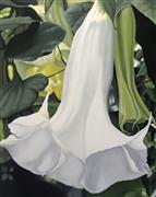 Flora art,Realism art,Representational art,oil painting,Trumpet Flower